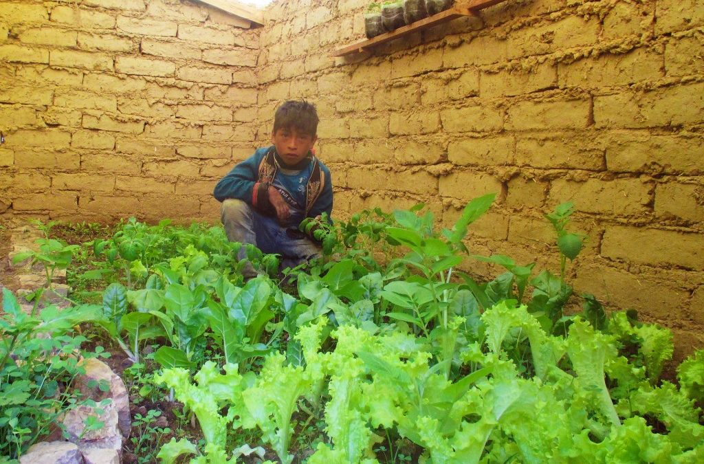 One Family's Greenhouse in Huayco Arriba, Bolivia