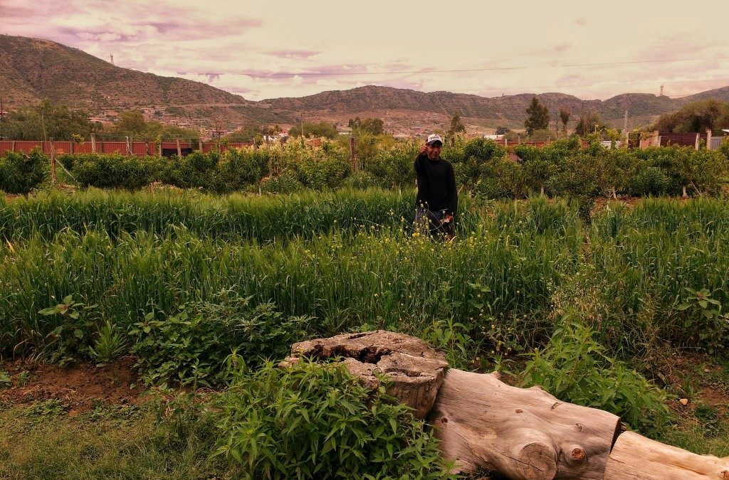 Video Tour: Mano a Mano's Center for Ecological Agriculture in Cochabamba, Bolivia